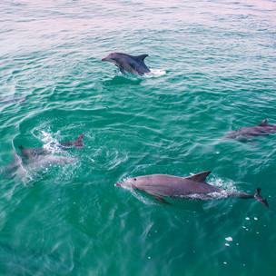 Our Legendary Journey: Port Macquarie
