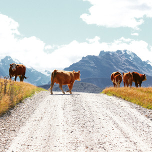 15 of the most scenic places in New Zealand