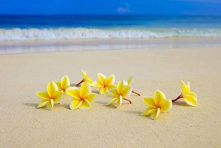 Yellow plumeria beach.jpg