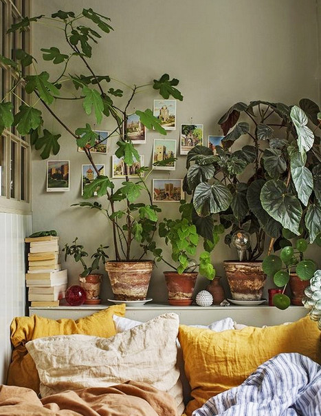 Fig and begonia