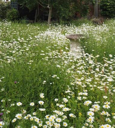daisy ar 1.jpg