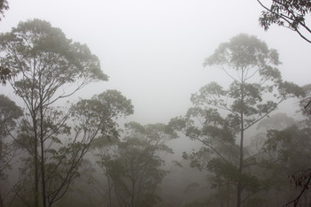 cloudy forest.jpg