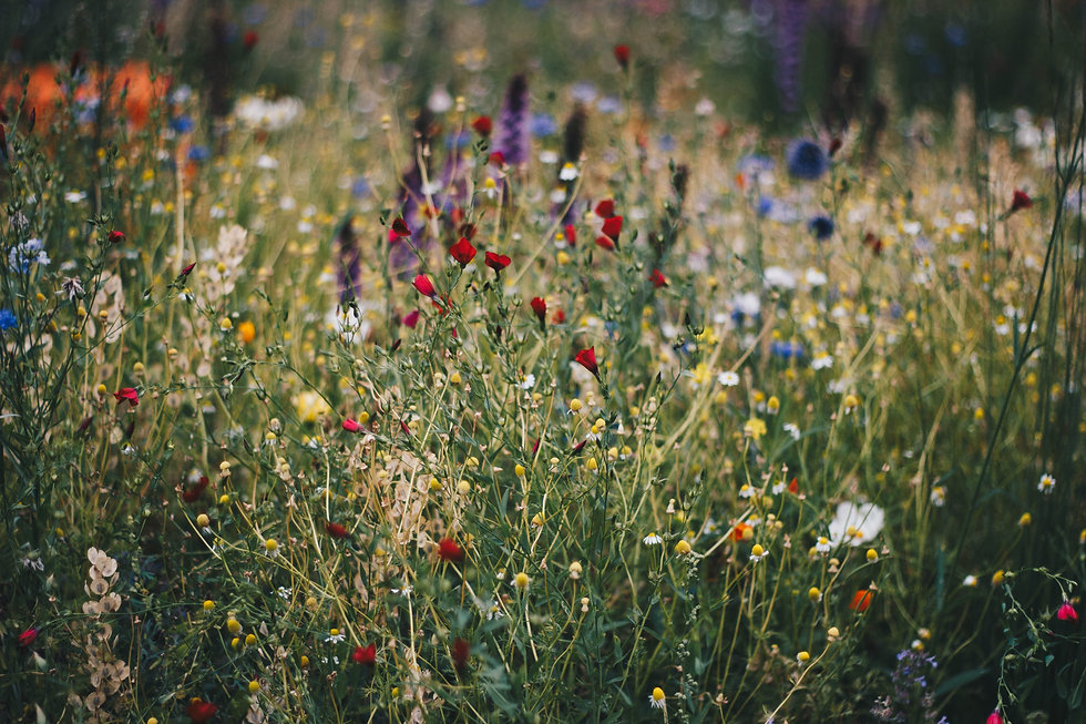 meadow flowers natural planting wild