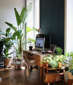 work desk and plants 1.jpg