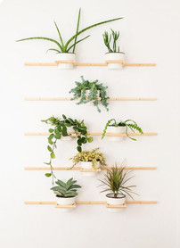 wall plant 1.jpg
