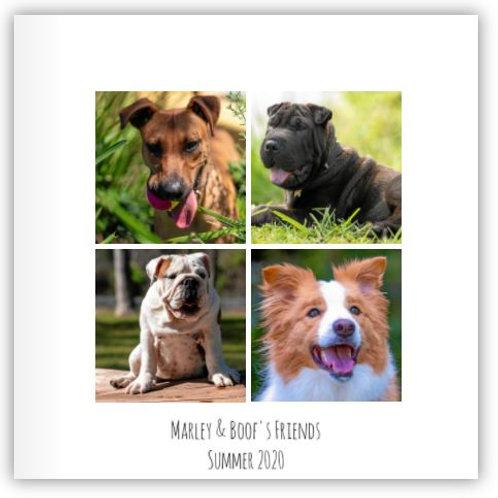 Marley & Boof' Friends - Summer2020 Photobook