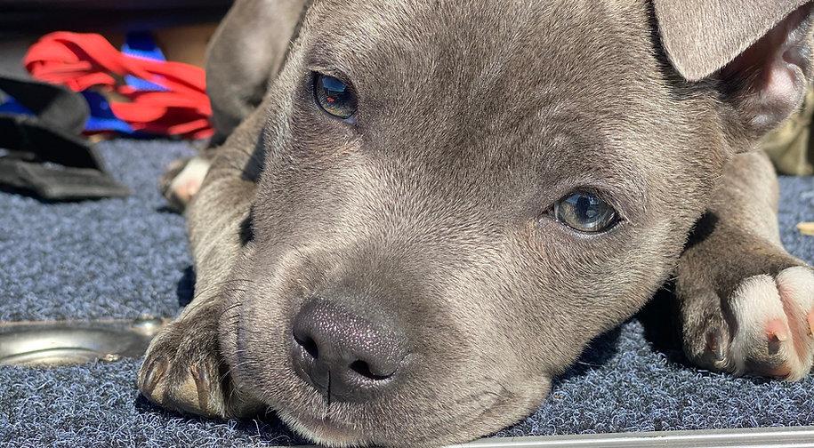 Puppypix