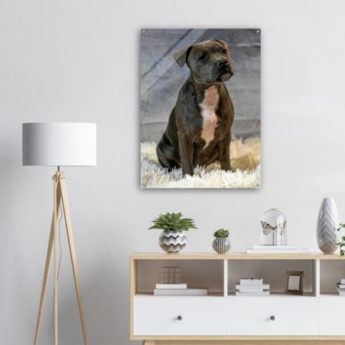 Puppypix - Acrylic Wall Art