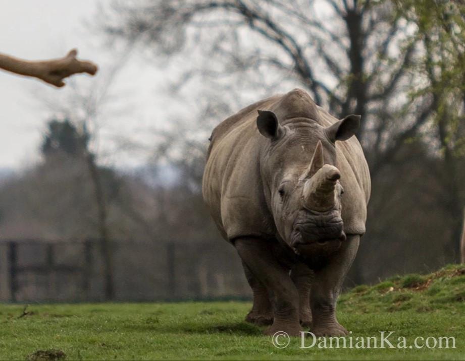 Zwierzęta (6).jpg