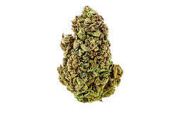 Grape Haze Bud