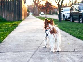 Wissenswertes über die Hundehaltung in Wien