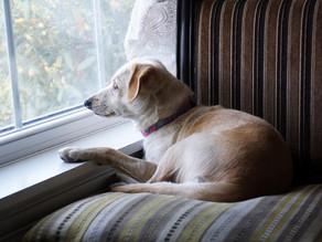 Was nach der Corona-Krise auf unsere Hunde zukommt