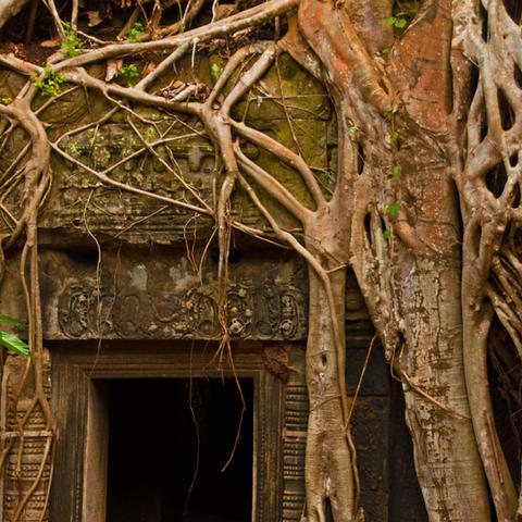 Ta-Prohm-root-entrance-for-web.jpg