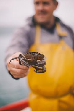 lobster-9