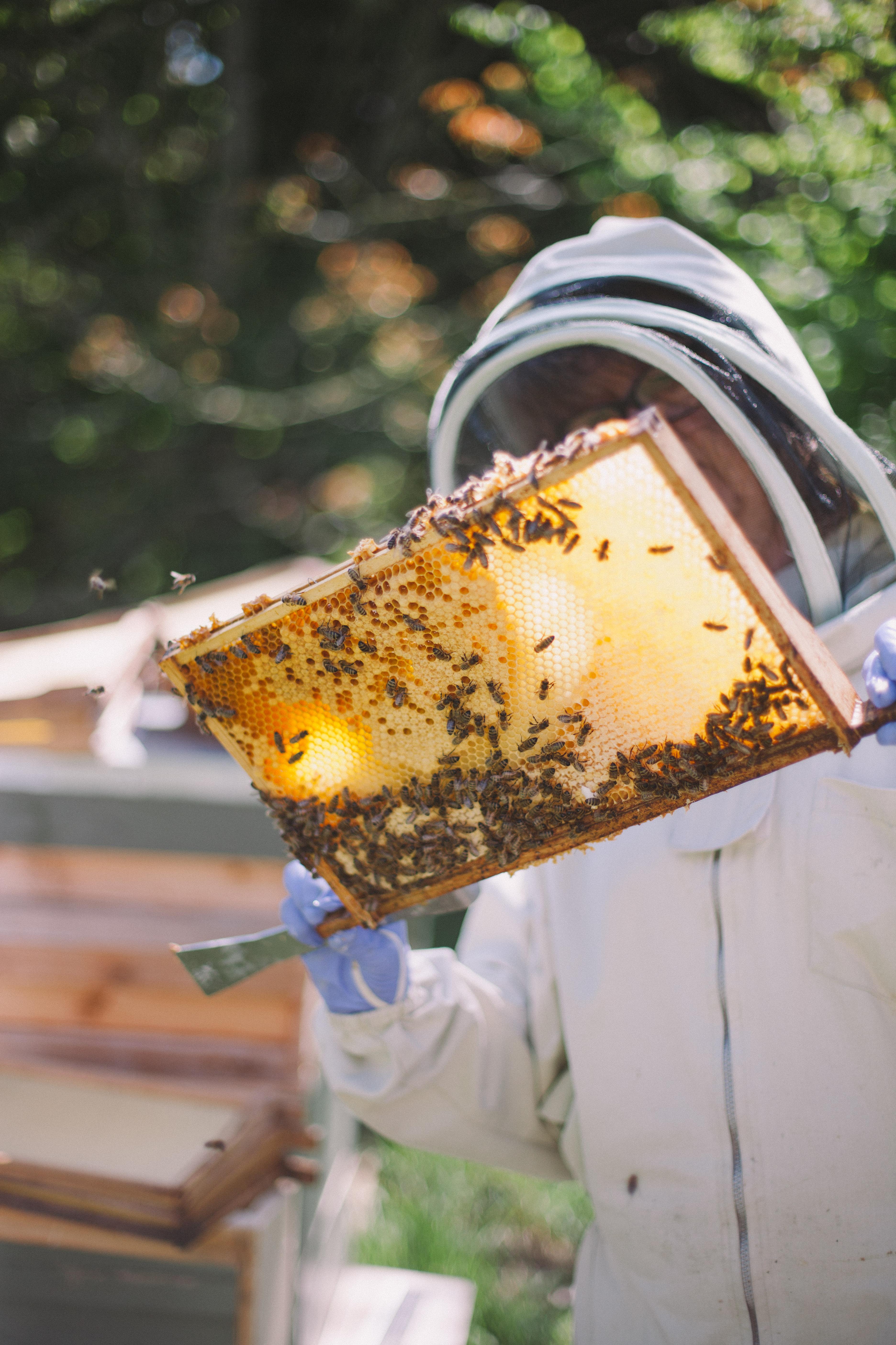 Bee-71