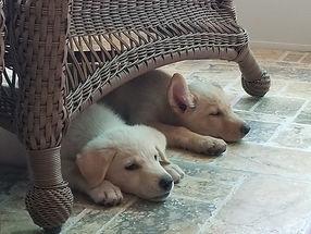 Bonnie and Clyde under chair.jpg