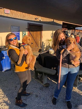 LC GR Meet up pups.jpg