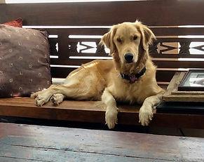 Woody bench 060421.jpg