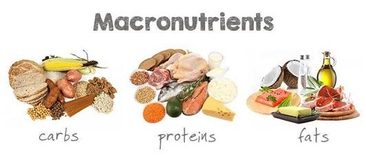 macronutrients[1].jpg