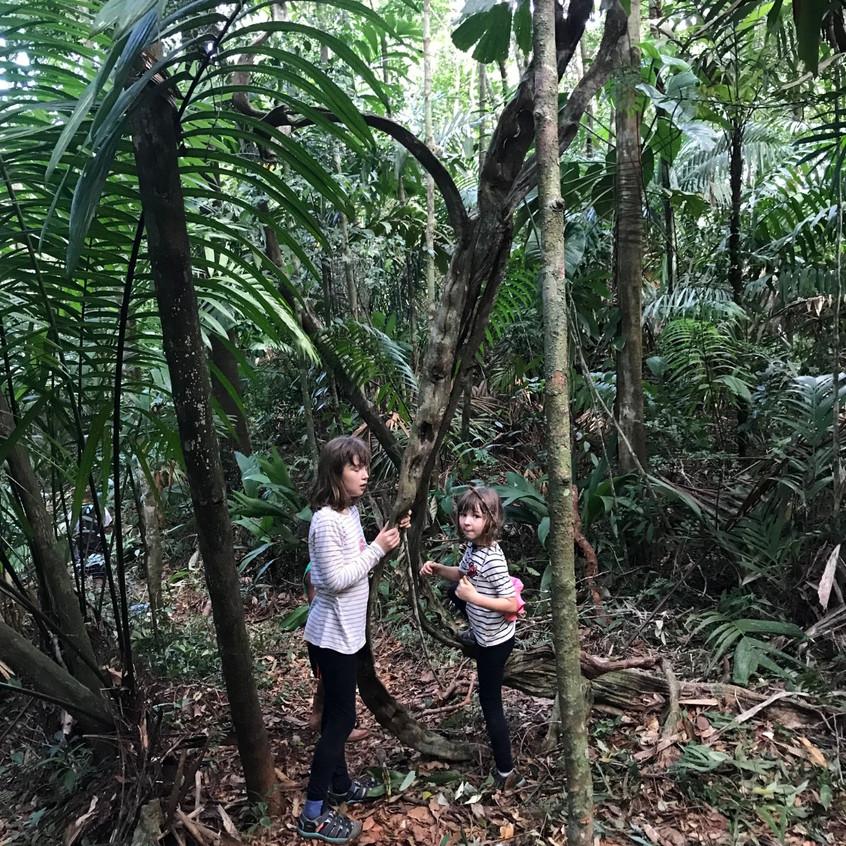 Strom pre opice