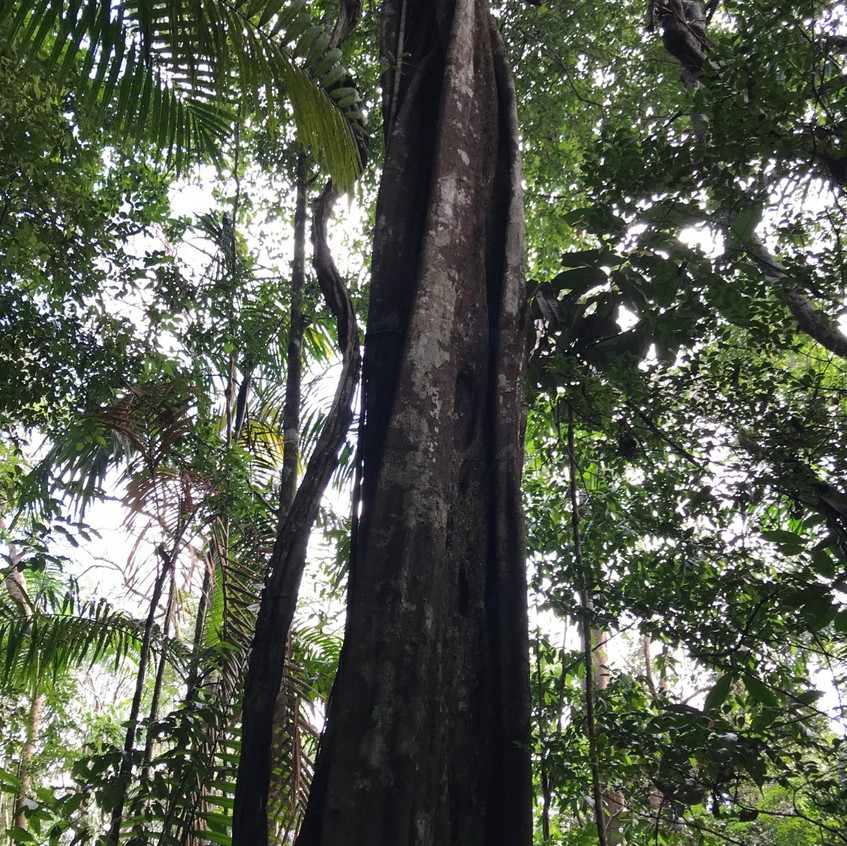 Strom s výťahom pre opice