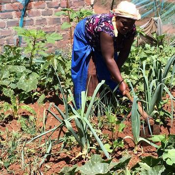 EcoMamasGlobal Community Gardens