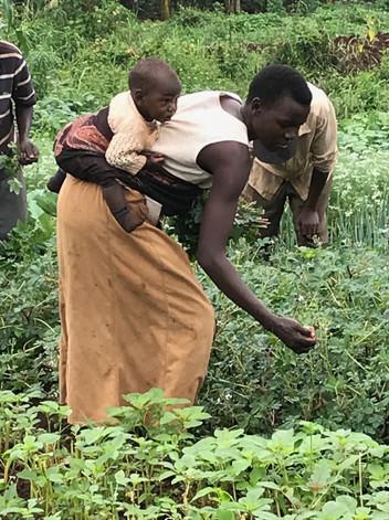 ECO MAMAS GLOBAL COMMUNITY GARDENS, JINJA UGANDA, EAST AFRICA