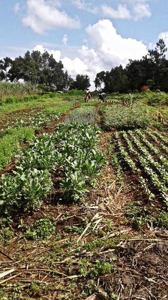 Eco Mamas Global community gardens