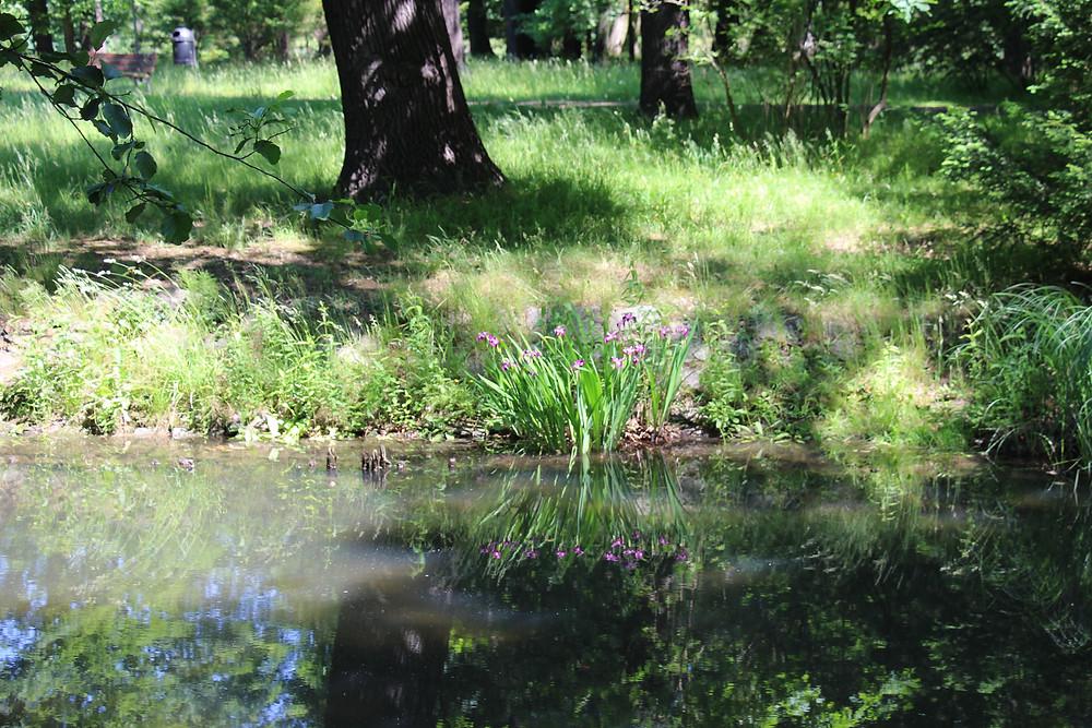 Park Szczytnicki