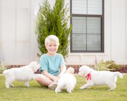 White Golden Retriever Puppies