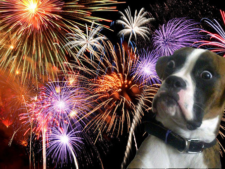 Best Practices for Pet Owners on the 4th of July