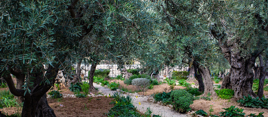 Why Christians Should Be Thankful for Holy Land Trips