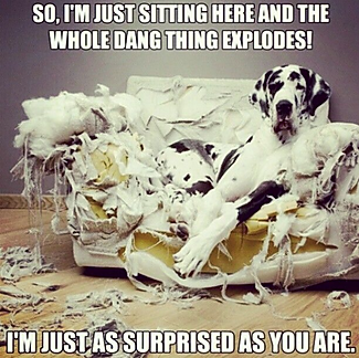 A dog with a shredded bed