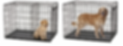 Golden Retriever Puppy and Adult in a Wire kennel