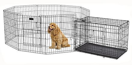 A cocker Spaiel in a wire enclosure