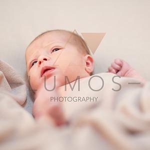 Baby Holly