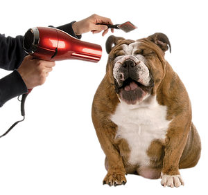 Animal clipper pet grooming solutioingenieria