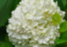 Dybkilde blomster er en virksomhed