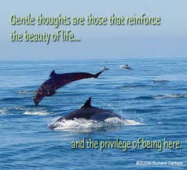 Gentle thoughts...