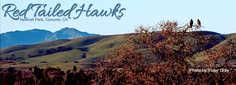 Redtail-Hawks.jpg