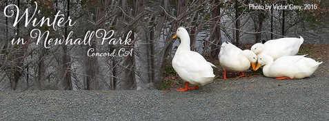 WinterInNewhallPark.jpg