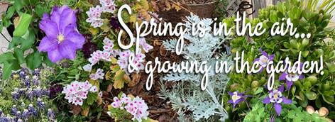 FB-TimelineCvr-SpringIsInTheAir.jpg