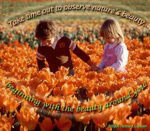 observe nature's beauty