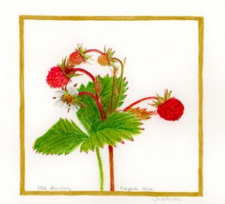Wild strawberry - Summer Vibes
