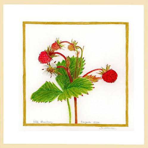 Wild Strawberry – Summer Vibes by Iwona W. Zulawska