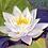 Thumbnail: Water Lily – Floating summer cloudby Iwona W. Zulawska