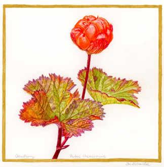 Cloudberry - Autumn Is Coming