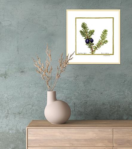 Black Crowberry – Bears Delight by Iwona W. Zulawska