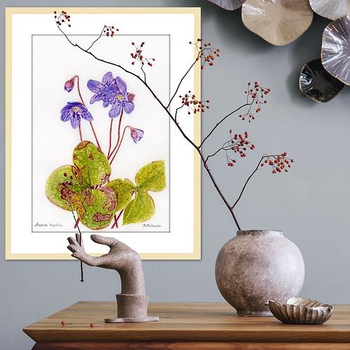 Anemone Hepatica –Spring Skies by Iwona W.Zulawska