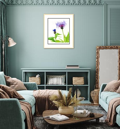 Cornflower – Blue Petals Labyrinth by Iwona W. Zulawska